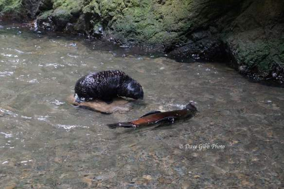 Seals02