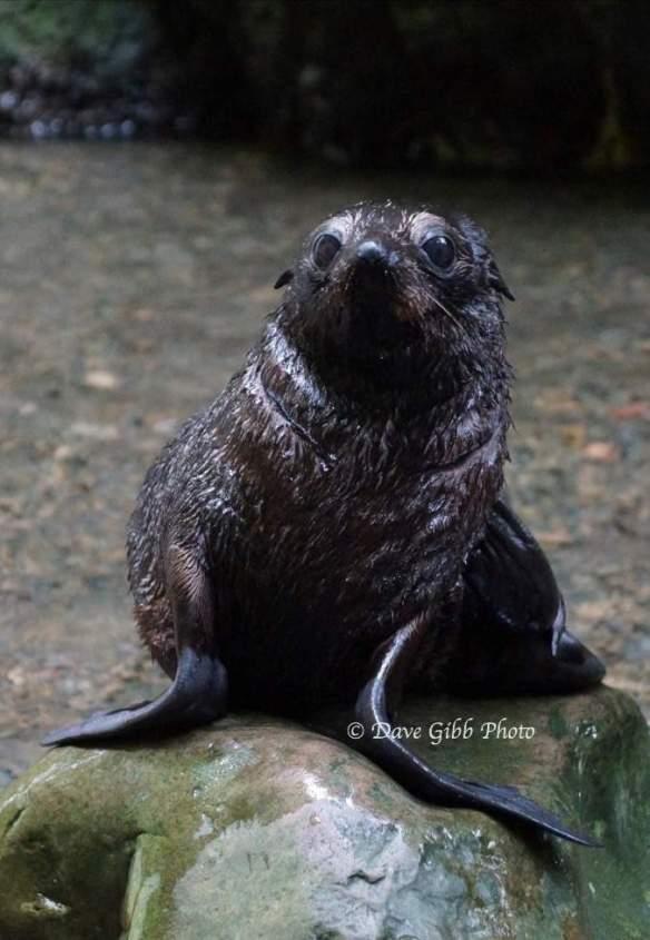 Seals04