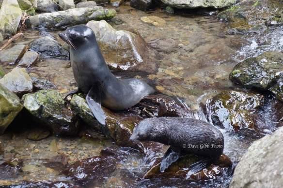 Seals07