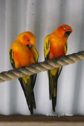 Birdworld01