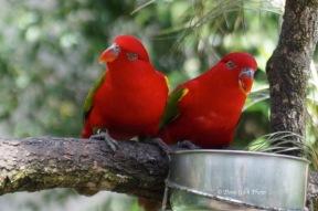 Birdworld02