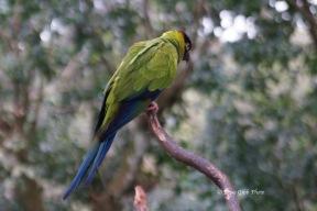 Birdworld13