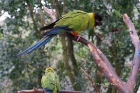 Birdworld14