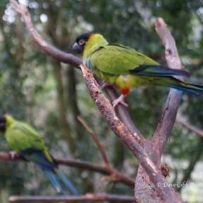 Birdworld15
