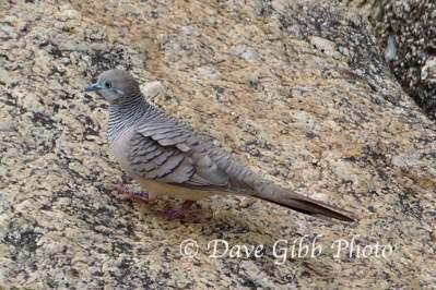 Granite Gorge Cooktown09